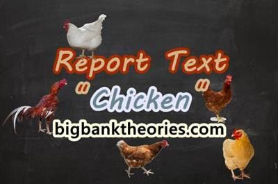Report Text Bahasa Inggris Tentang Ayam