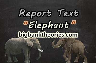 Report Text Bahasa Inggris Tentang Gajah