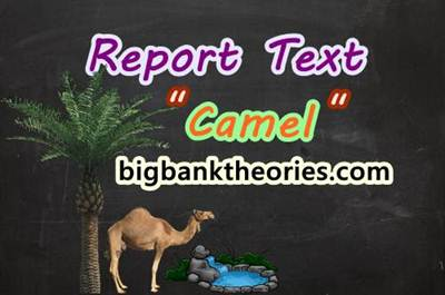 Report Text Bahasa Inggris Tentang Unta