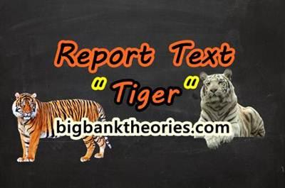 Contoh Report Text Singkat Tentang Harimau Dan Artinya