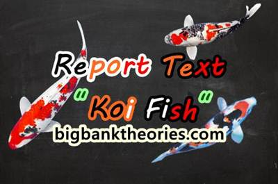 Contoh Report Text Pendek Tentang Ikan Koi Beserta Artinya