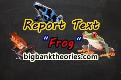 Report Text Bahasa Inggris Tentang Katak