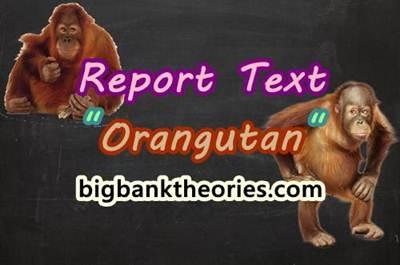 Report Text Bahasa Inggris Tentang Orang Utan