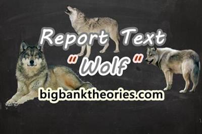 Report Text Bahasa Inggris Tentang Serigala