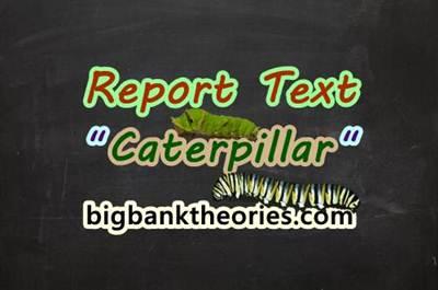 Report Text Bahasa Inggris Tentang Ulat