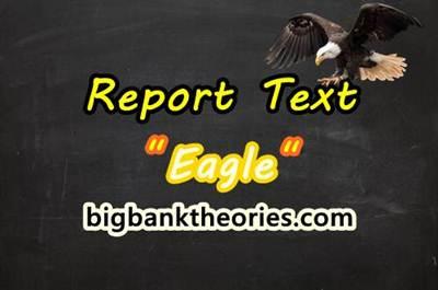Report Text Bahasa Inggris Tentang Elang
