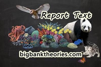 Report Text Bahasa Inggris Tentang Hewan