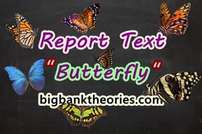 Report Text Bahasa Inggris Tentang Kupu Kupu