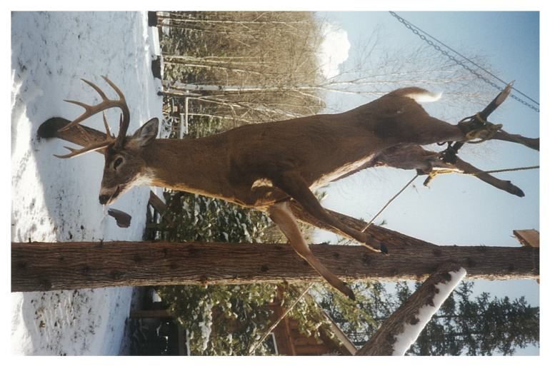 Big Buck - Bigbearoutfitters.co
