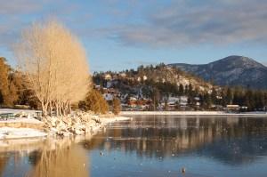 Trees on Winter at big bear lake