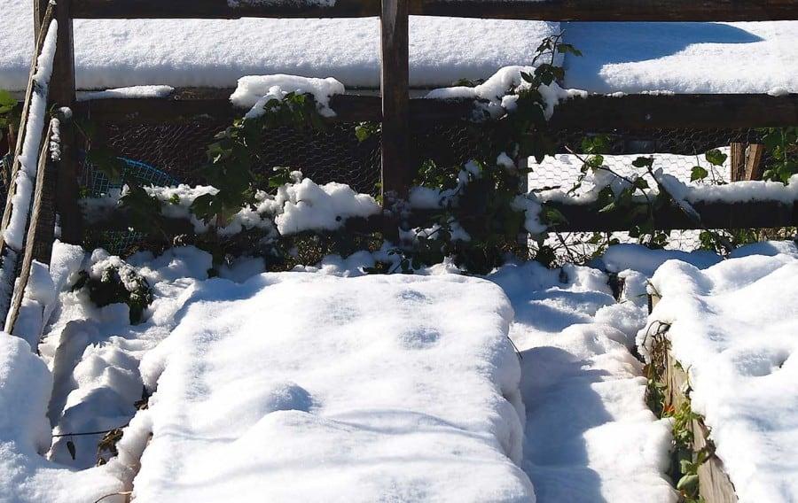 la nieve aísla las camas de jardín elevadas