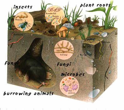 Red alimentaria del suelo