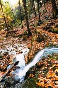 autumn tree leaves in pennsylvania woods