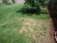 dormant dry summer lawn
