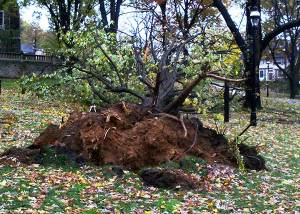 hurricane sandy damage bethlehem pa lehigh university