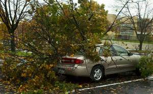 hurricane sandy damage bethlehem pa tree falls on car