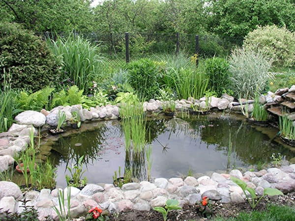 tratamiento de agua de estanque de jardín
