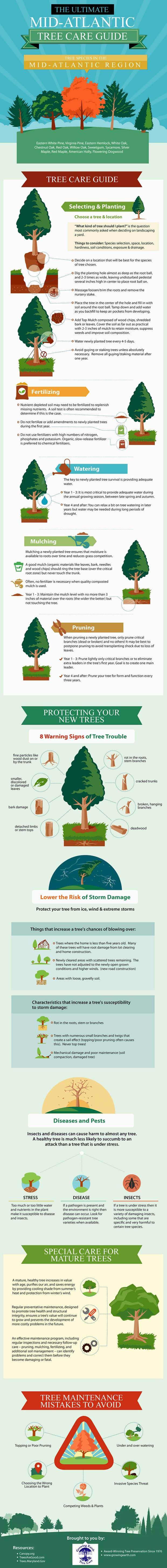 infografía de la guía del cuidado de los árboles del atlántico medio