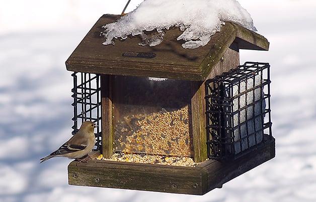 aves como control de insectos