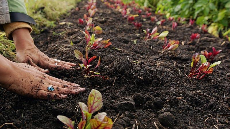 suelo orgánico