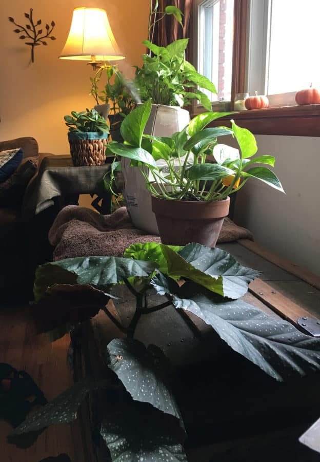 consejos de jardinería interior de invierno