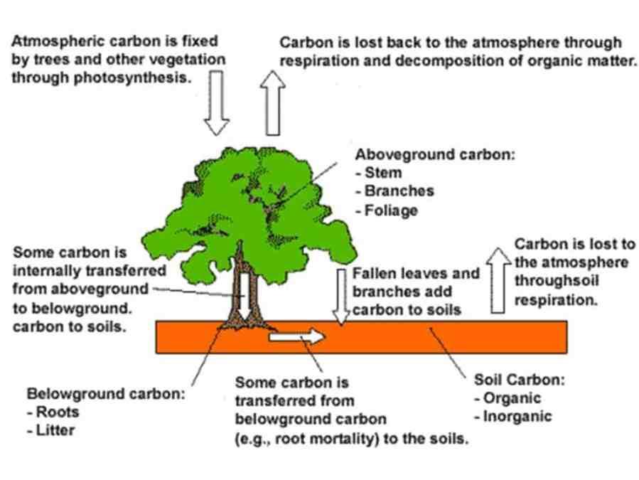 Los devastadores efectos de la deforestación