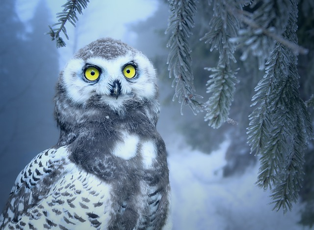snow Owl In Dream
