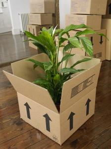 moving plants