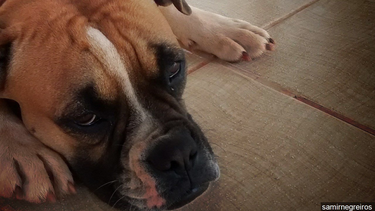 Dog_1458342551162.jpg