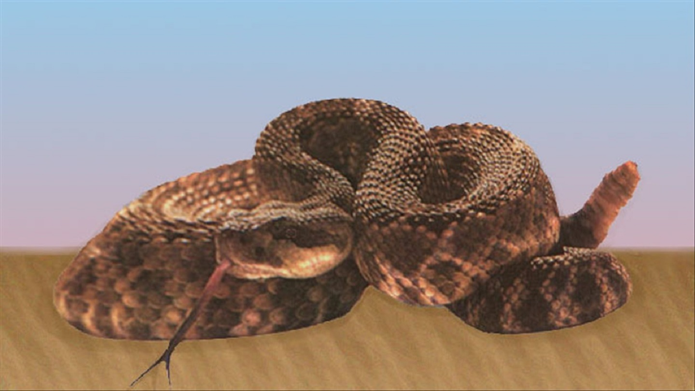 rattlesnake_1503847540166.jpg