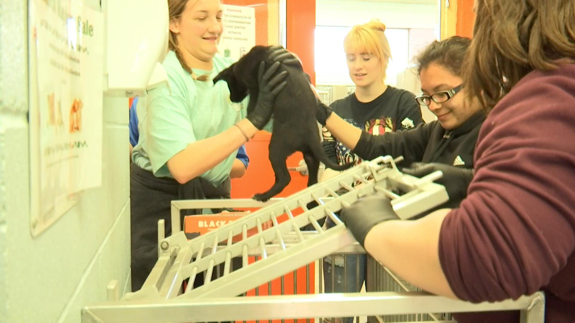 Eula FCA students volunteering at the Abilene Animal Shelter.