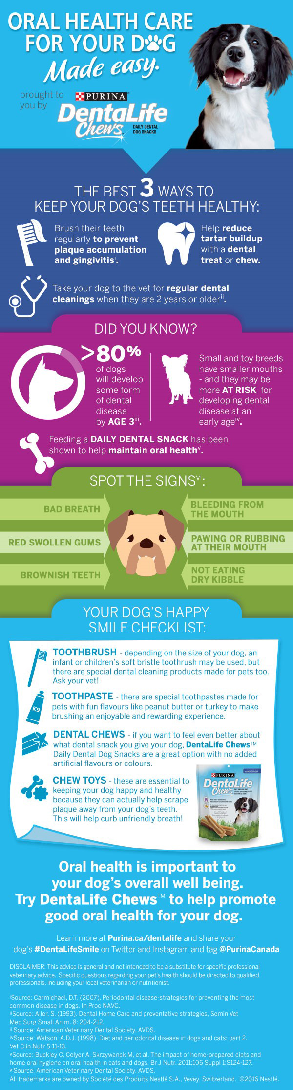 dog oral health infographic