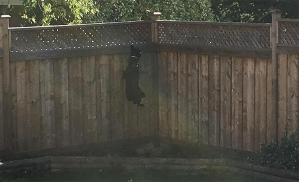 Storm jumping near fence