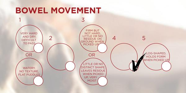ONE Score Bowel Movement