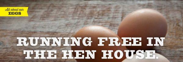 fionn eggs