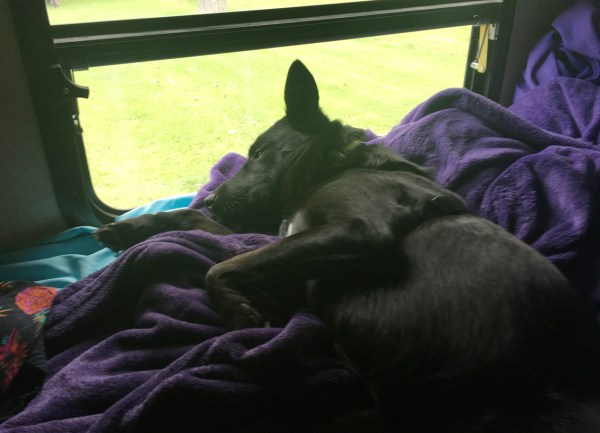 camping with Storm sleeping