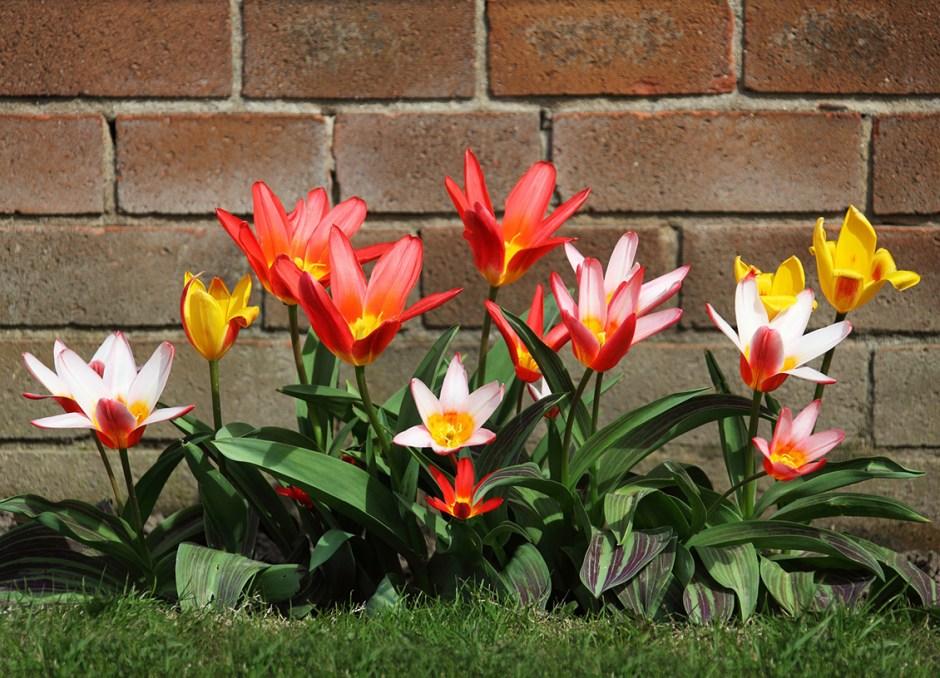 home garden blooms