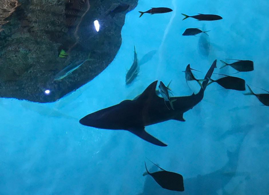 Aquarium Encounters sharks