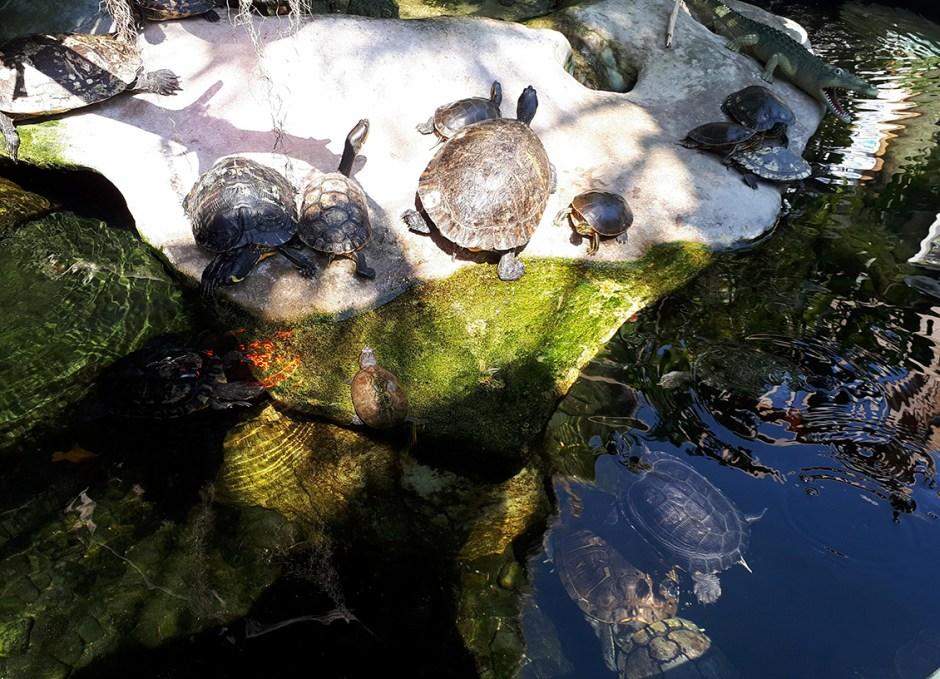 Aquarium Encounters turtles in water