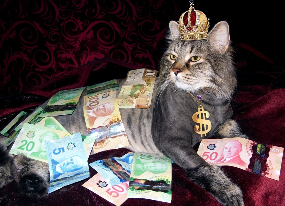 Cash Is Greener Giveaway cat with money