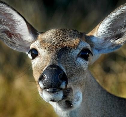 Florida Keys: A Visit to the National Key Deer Refuge in Big Pine Key