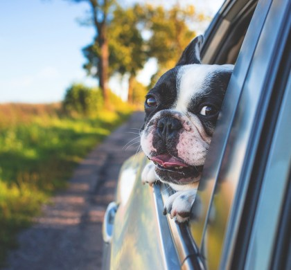 4 Things You Should Never Do With Your Dog