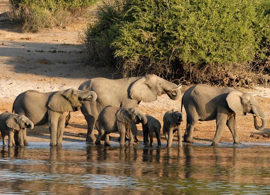 solo travellers botswana africa