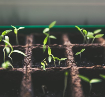 All You Need To Know About Creating A Grow Room