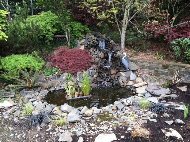 Backyard Ponds And Waterfalls Pictures