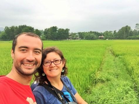 hue pirinc tarlaları