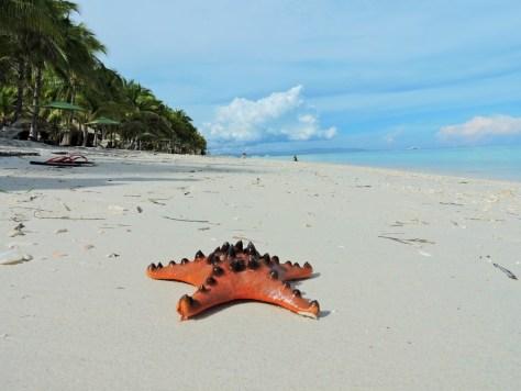 panglao adası