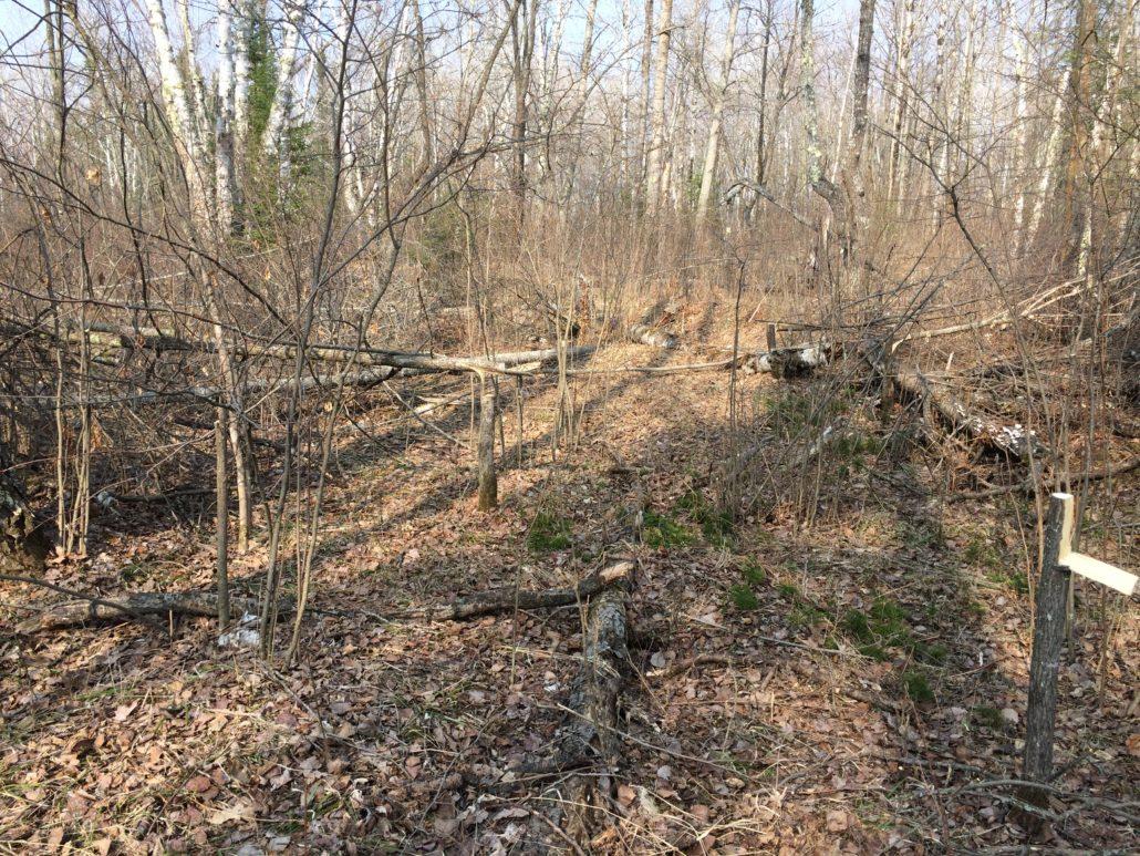 Deer Hunting Accessories For Spring Wildlife Habitat