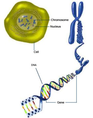 cell to gene