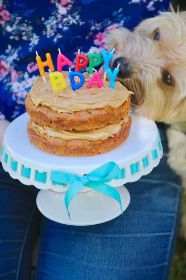 dog birthday cake, dog cake, dog cake recipe, dog birthday cake recipe, how to make a dog cake, pupcake recipe, cake for dog, cake for dogs, how to make cake for dogs, making a cake for a dog, dog cakes, doggy cakes
